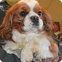 Adopt A Pet :: Prince Harry - Prole, IA
