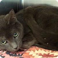 Adopt A Pet :: Rose #2 - Lunenburg, MA