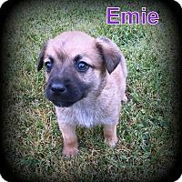 Adopt A Pet :: Emie - Denver, NC