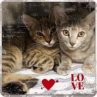 Adopt A Pet :: Karla and Karmen - Harrisburg, NC