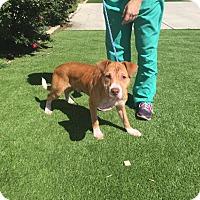 Adopt A Pet :: Leo - Charlotte, NC