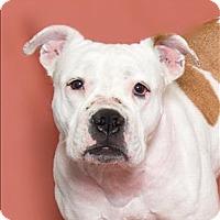 Adopt A Pet :: Abby - San Luis Obispo, CA