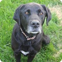 Adopt A Pet :: Rocky - Logan, UT