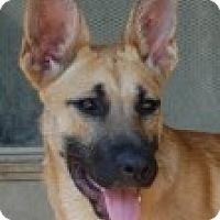 Adopt A Pet :: Brie - Dripping Springs, TX