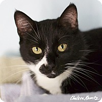 Adopt A Pet :: Julia - Los Angeles, CA