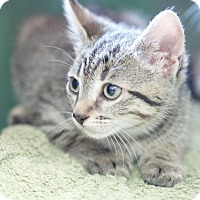Adopt A Pet :: Roscue - Marietta, GA