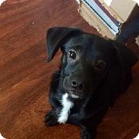 Adopt A Pet :: Max - Austin, TX