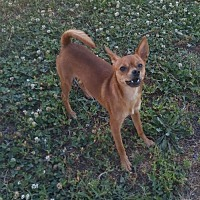 Adopt A Pet :: Fernando - Godfrey, IL