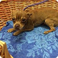 Adopt A Pet :: Falo - Decatur, AL