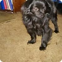 Adopt A Pet :: Buddy - Okeechobee, FL
