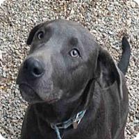 Adopt A Pet :: JACOB - Missoula, MT