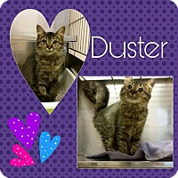 Adopt A Pet :: Duster - Steger, IL