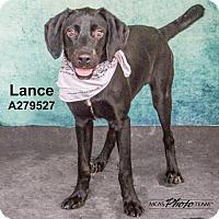 Adopt A Pet :: LANCE - Conroe, TX