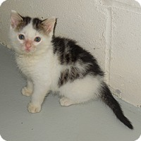 Adopt A Pet :: Shea - Burgaw, NC