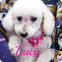 Adopt A Pet :: Lucy - Maitland, FL