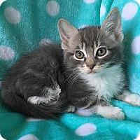 Adopt A Pet :: Barney - Tampa, FL