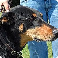 Adopt A Pet :: Jada - New Richmond, OH