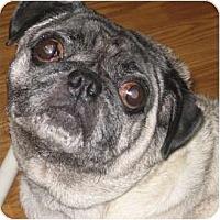 Adopt A Pet :: Frankie-VA - Mays Landing, NJ