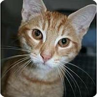 Adopt A Pet :: Drake - Frederick, MD