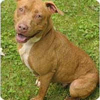 Adopt A Pet :: Candy - Chicago, IL