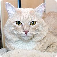 Adopt A Pet :: Steve - Irvine, CA