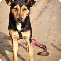 Adopt A Pet :: Amani - Orange, CA