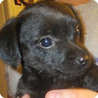 Adopt A Pet :: Sally - Salem, NH