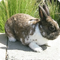 Adopt A Pet :: Milkshake - Bonita, CA