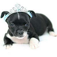 Adopt A Pet :: Andromeda - Austin, TX