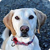 Adopt A Pet :: Larkin - Pleasant Plain, OH