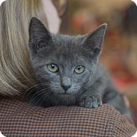 Adopt A Pet :: Jon - Brooklyn, NY