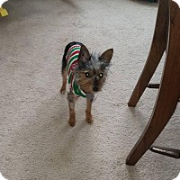 Adopt A Pet :: LUCY ~ TINY - WOODSFIELD, OH