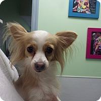 Adopt A Pet :: Ally - Queenstown, MD
