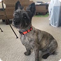 Adopt A Pet :: Buddy - Davenport, IA