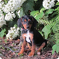 Adopt A Pet :: BUNNY - Bedminster, NJ