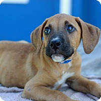 Adopt A Pet :: Sawyer - Waldorf, MD