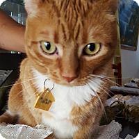 Adopt A Pet :: Kittie - Miami, FL