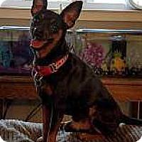 Adopt A Pet :: Sir Winston - Columbus, OH