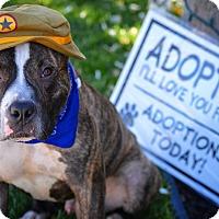 Adopt A Pet :: Magic Mike! - Redondo Beach, CA