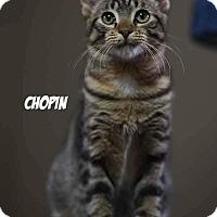 Adopt A Pet :: Chopin - Columbus, OH