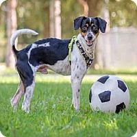 Adopt A Pet :: BUSTER - Vero Beach, FL