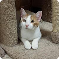 Adopt A Pet :: Marky - Whittier, CA