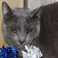 Adopt A Pet :: Emmett - Louisville, KY