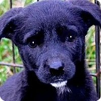 Adopt A Pet :: MISS REBA(ADORABLE TINY PUPPY! - Wakefield, RI