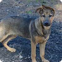 Adopt A Pet :: Ruger - Greensboro, NC