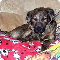 Adopt A Pet :: Charlie - available 2/25 - Sparta, NJ