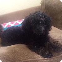 Adopt A Pet :: Mozzarella - Pittsburg, CA