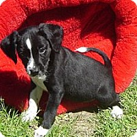 Adopt A Pet :: Sugarplum - Sugarland, TX