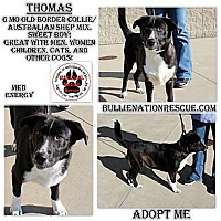 Adopt A Pet :: Thomas - Evansville, IN