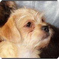 Adopt A Pet :: Simon - Lake Forest, CA